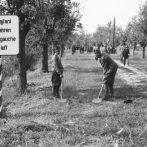 Trianon után 100 évvel – Magyarország mai határainak jogforrásai